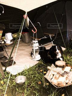 犬,動物,黒,キャンプ,バーニーズマウンテンドッグ