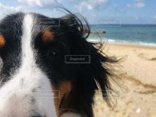 犬,海,空,動物,屋外,水面,アップ,バーニーズマウンテンドッグ
