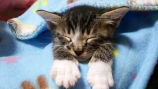 猫,動物,屋内,かわいい,寝る,子猫