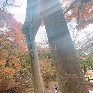 空,秋,屋外,太陽,神社,山,日差し,樹木,草木