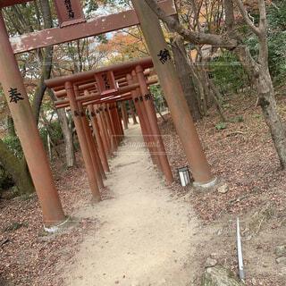 自然,屋外,神社,樹木,地面,遊び場,草木,聖地巡礼,鬼滅の刃