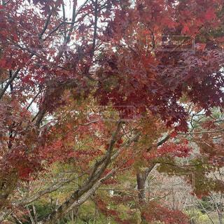 秋,紅葉,屋外,葉,樹木,草木