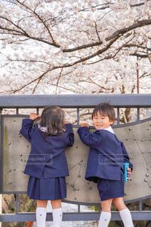 桜並木の下で兄妹制服フォトの写真・画像素材[4320225]