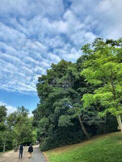 自然,風景,空,屋外,雲,草,樹木,草木