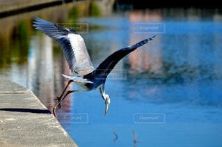動物,鳥,屋外,湖,水面