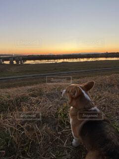 犬,空,動物,屋外,夕焼け,川,草