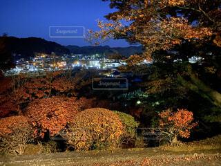風景,空,秋,夜景,紅葉,屋外,草,樹木,草木