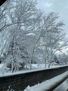 空,冬,雪,屋外,樹木,冷たい