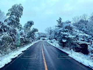 風景,空,冬,雪,屋外,道路,樹木,道,旅行