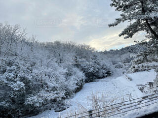 自然,風景,空,冬,雪,屋外,樹木,冷たい
