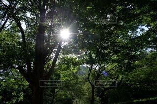 木漏れ日の写真・画像素材[4408553]
