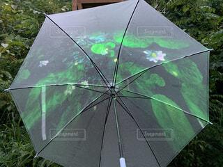 アクセサリー,雨,傘,緑,樹木,草木