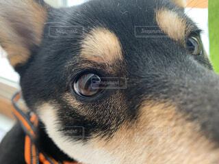 犬,動物,黒,目,見つめる