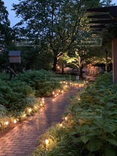 屋外,樹木,キャンドル,通り,ガーデン