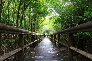 公園,橋,森林,木,屋外,散歩,水面,沖縄,景色,樹木,旅行,フェンス,歩道,木目,草木,エリア
