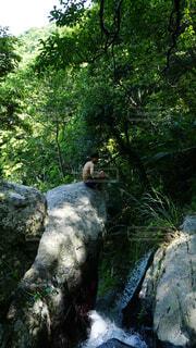 崖の上のPhoto.の写真・画像素材[4257993]