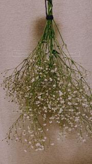 花,かすみ草,フラワー,ドライフラワー,草花,ハンドメイド,手作り,草木