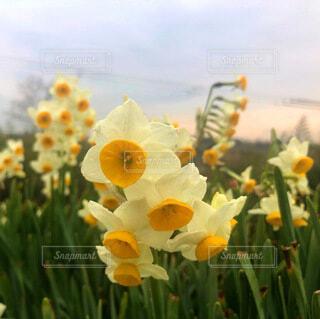 自然,空,花