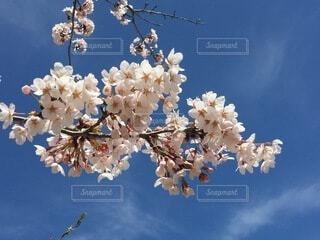 空,花,春,青い空,桜の花