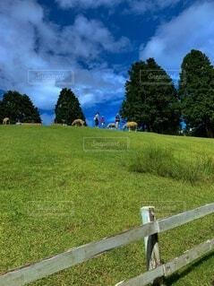 風景,空,屋外,雲,山,景色,草,樹木,新緑,フェンス,草木,日中