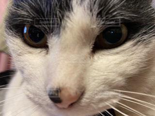 猫,動物,かわいい,見つめる,ネコ科