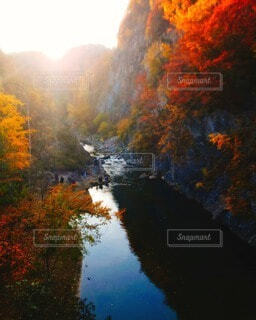 秋,紅葉,屋外,川,水面,紅,樹木