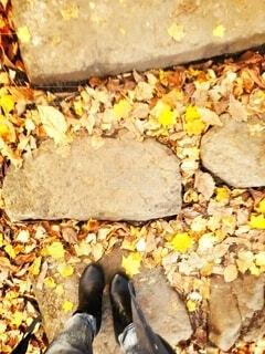 秋,黄色,葉,地面
