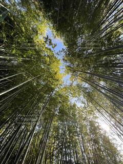 空,秋,森林,屋外,葉,樹木,草木