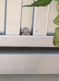 夏,屋内,窓,壁,家庭菜園,灰色,爬虫類,蛙,同化,ハマる,住み込み