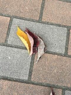 枯れ葉,アート,葉,道,地面,石,通り,帰り道,何気ない,トリオ,舗装,娘撮影