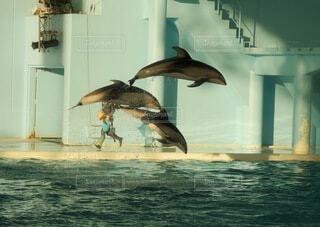 動物,鳥,魚,イルカ,水面,泳ぐ,海獣,テキスト