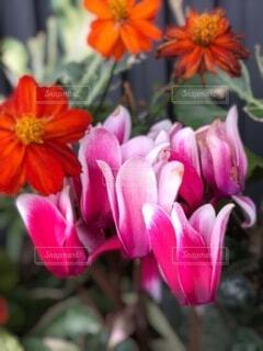 花,赤,花びら,草木,ブルーム,フローラ
