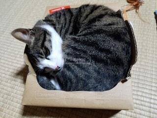 猫,動物,屋内,ネコ科