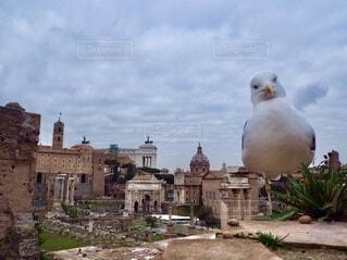 空,動物,鳥,屋外,海外,雲,ローマ,ヨーロッパ,街,観光,美しい,旅行,遺跡,旅,カモメ,イタリア,町,神殿
