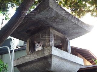 猫,神社,かわいい,観光,仔猫,旅行,旅,日本,和,福岡,オッドアイ,灯籠,こんにちは