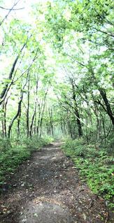 自然,森林,登山,人生の経路