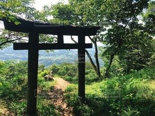 森林,鳥居,異世界
