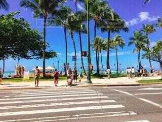 空,屋外,ビーチ,青空,道路,樹木,ヤシの木,ハワイ,パーム