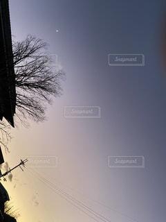 空,冬,木,屋外,夕焼け,夕暮れ,霧,樹木,紫空