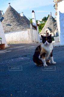 猫,空,建物,動物,屋外,世界遺産,石畳,地面,イタリア,三毛猫,アルベロベッロ,みけねこ,トゥルリ