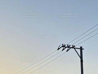 晴れた夕方の空と電線の写真・画像素材[4647111]