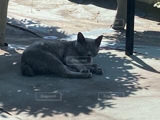 猛暑の中、小さな木陰で涼をとる野良猫の写真・画像素材[4673886]