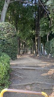 公園,屋外,樹木,地面,草木