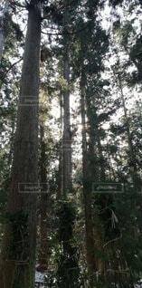 森林,木,屋外,樹木,木立,トランク,草木,原生林,ウッドランド,バイオーム