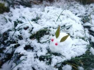 雪うさぎの写真・画像素材[4151939]