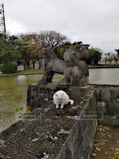 猫,公園,動物,屋外,池,沖縄,ねこ,白猫,門,像,野良猫,シーサー,琉球,彫刻,ネコ