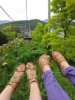 花,屋外,緑,足,山,景色,観光,草,楽しい,人物,人,旅行,二人,リフト,見下ろす,草木,ユリ
