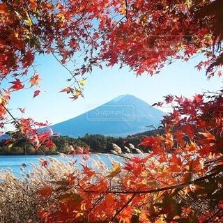 自然,風景,空,秋,紅葉,屋外,湖,水面,山,樹木,草木,カエデ