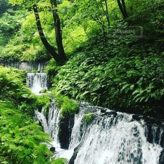 自然,風景,夏,森林,屋外,綺麗,川,水面,滝,樹木,草木