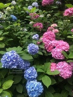 花,雨,景色,梅雨,草木,ボタニカル,ガーデン,ブルーム,フローラ
